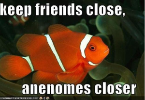 Clownfish and Anemones